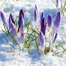 Астрологический прогноз на неделю с 20 по 26 марта